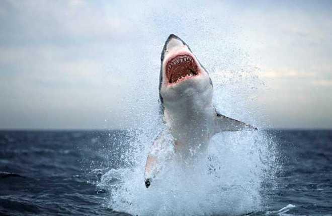 farmacia vincente squalo